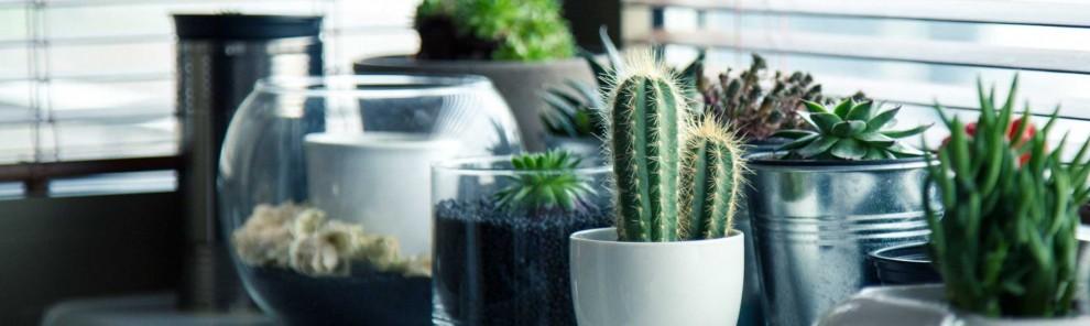 Recipientes y jardinería